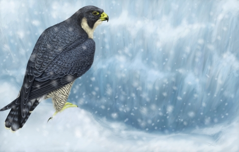 falcon-in-snow